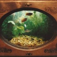 aquarium216