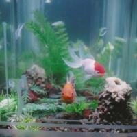aquarium217