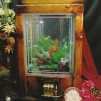 woodglass241